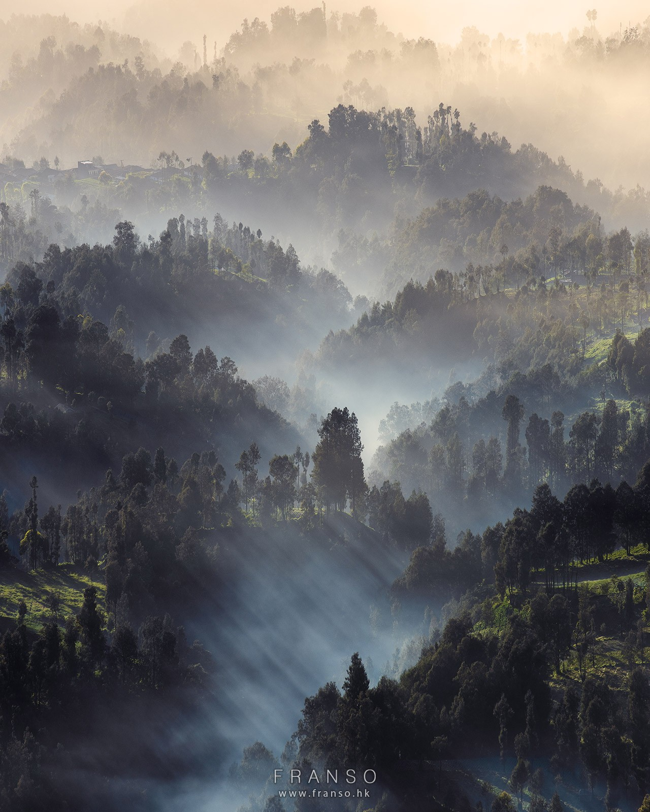 Landscape | Overseas | The mist and the forest |